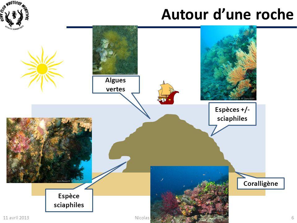 Autour dune roche Algues vertes Espèce sciaphiles Espèces +/- sciaphiles 11 avril 2013Nicolas LEVEAU6 Coralligène