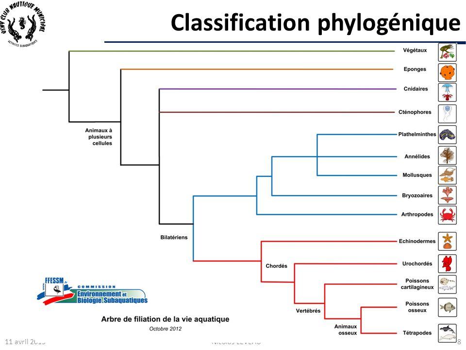 Classification phylogénique 11 avril 2013Nicolas LEVEAU8