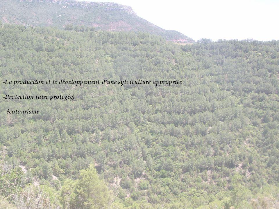 - La production et le développement dune sylviculture appropriée - Protection (aire protégée) - écotourisme