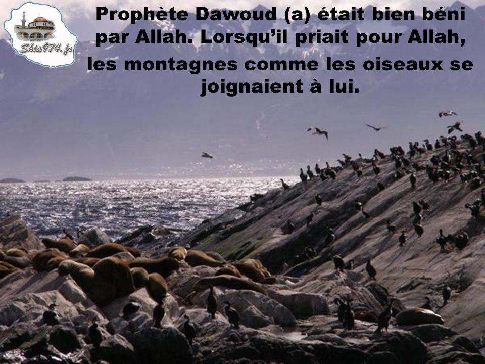 Prophète Dawoud (a) était bien béni par Allah. Lorsquil priait pour Allah, les montagnes comme les oiseaux se joignaient à lui.