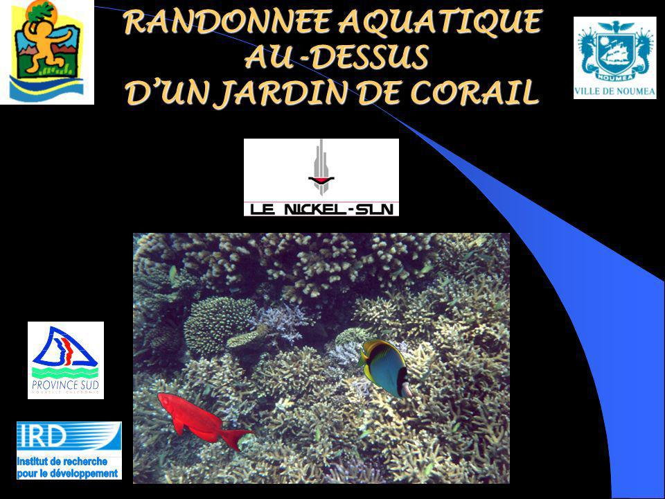 RANDONNEE AQUATIQUE AU-DESSUS DUN JARDIN DE CORAIL