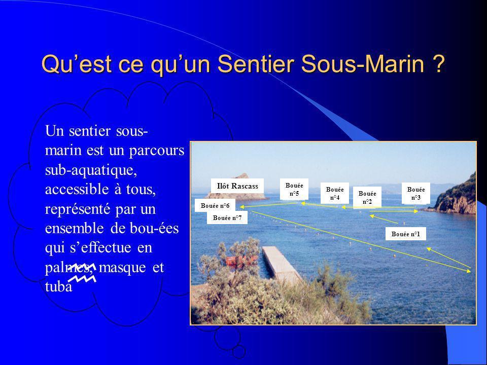 Un sentier sous- marin est un parcours sub-aquatique, accessible à tous, représenté par un ensemble de bou-ées qui seffectue en palmes, masque et tuba Quest ce quun Sentier Sous-Marin .