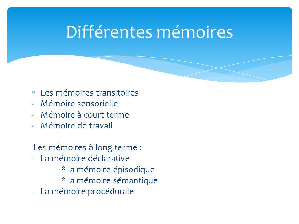 Les mémoires transitoires -Mémoire sensorielle -Mémoire à court terme -Mémoire de travail Les mémoires à long terme : -La mémoire déclarative * la mém