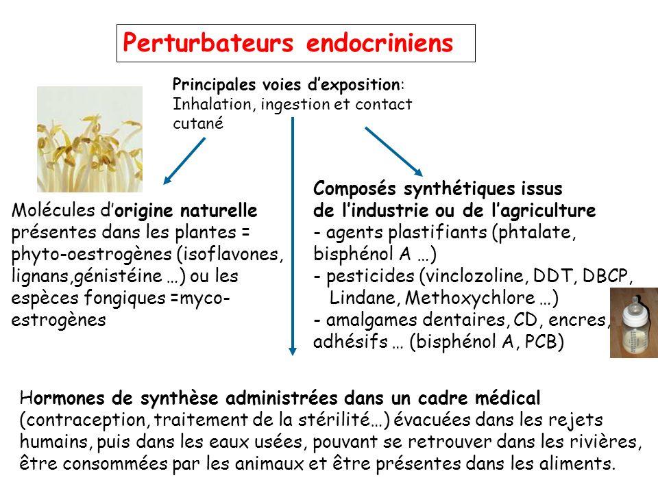 Perturbateurs endocriniens Molécules dorigine naturelle présentes dans les plantes = phyto-oestrogènes (isoflavones, lignans,génistéine …) ou les espè