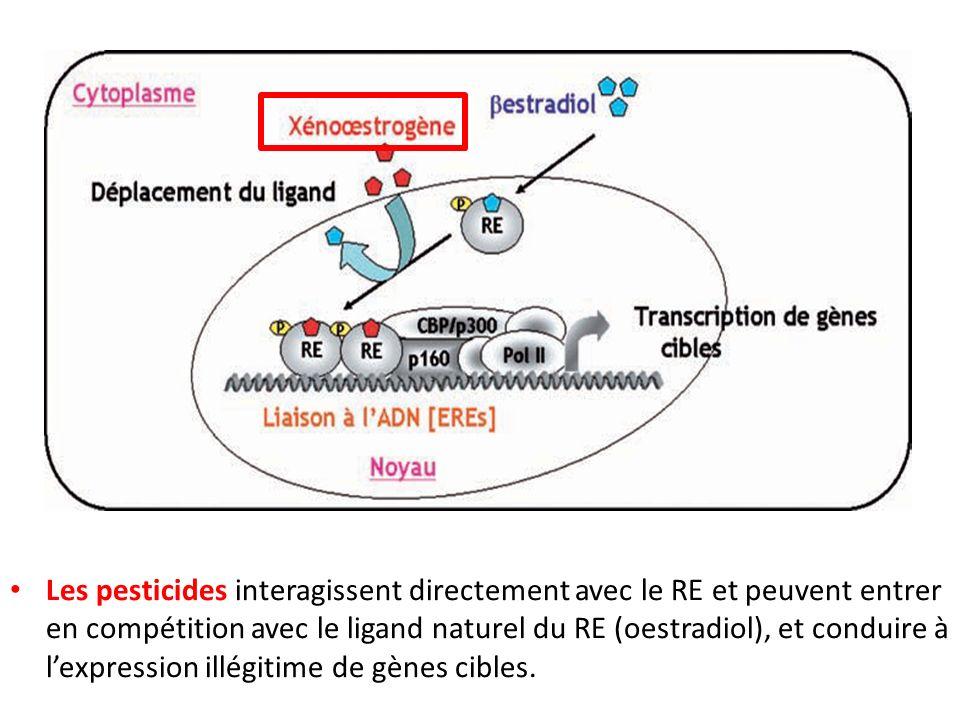Les pesticides interagissent directement avec le RE et peuvent entrer en compétition avec le ligand naturel du RE (oestradiol), et conduire à lexpress