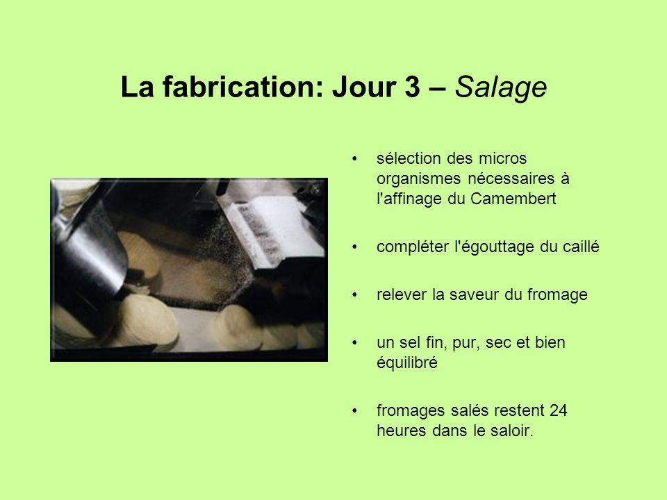 La fabrication: Jour 3 – Salage sélection des micros organismes nécessaires à l'affinage du Camembert compléter l'égouttage du caillé relever la saveu