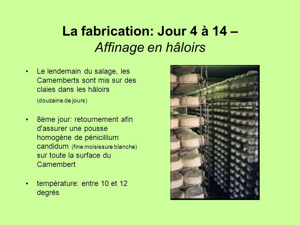 La fabrication: Jour 4 à 14 – Affinage en hâloirs Le lendemain du salage, les Camemberts sont mis sur des claies dans les hâloirs (douzaine de jours)