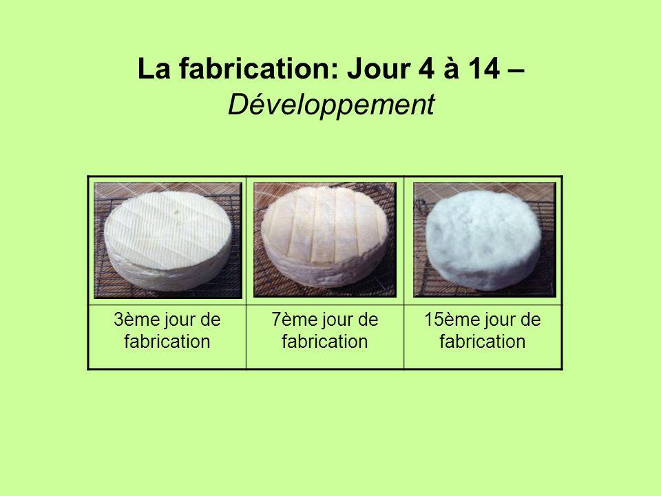 La fabrication: Jour 4 à 14 – Développement 3ème jour de fabrication 7ème jour de fabrication 15ème jour de fabrication