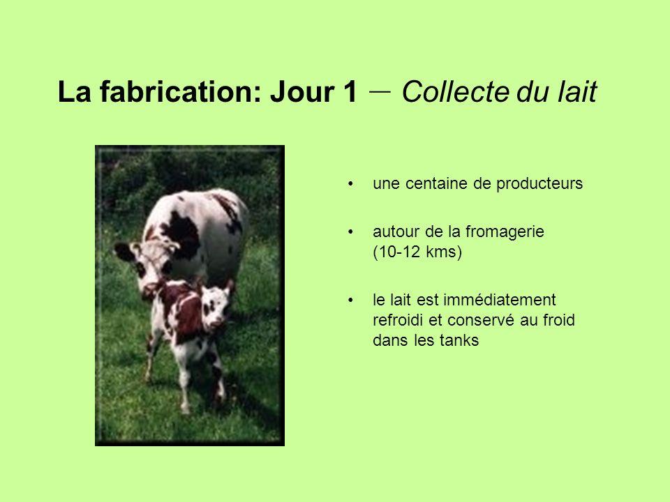 La fabrication: Jour 1 – Collecte du lait une centaine de producteurs autour de la fromagerie (10-12 kms) le lait est immédiatement refroidi et conser