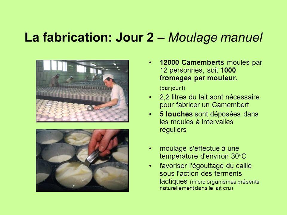 La fabrication: Jour 2 – Moulage manuel 12000 Camemberts moulés par 12 personnes, soit 1000 fromages par mouleur. (par jour !) 2,2 litres du lait sont