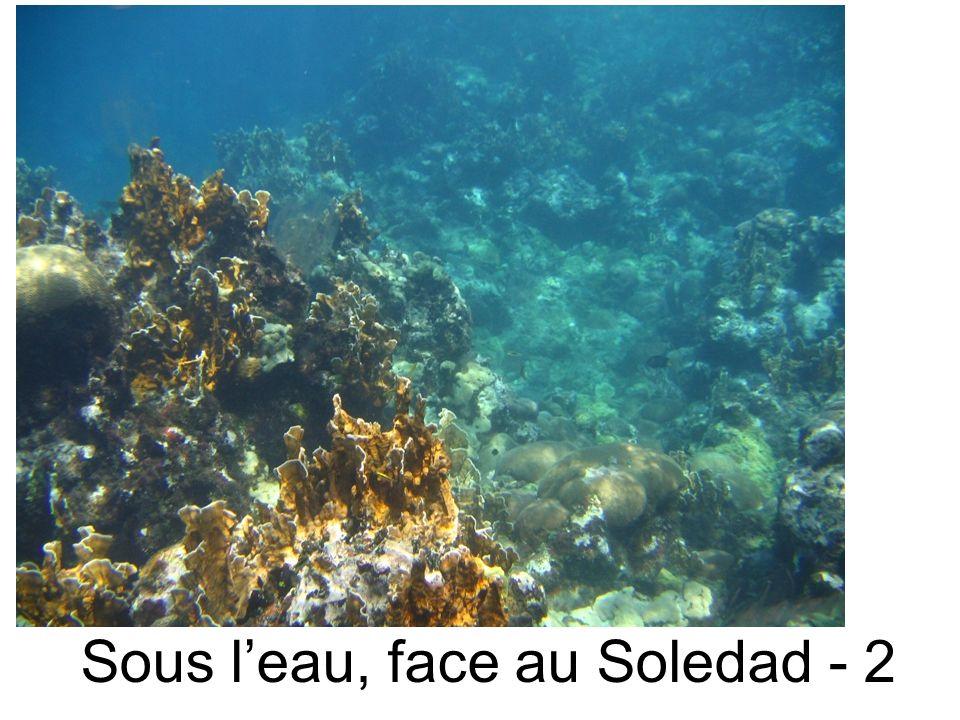 Sous leau, face au Soledad - 2