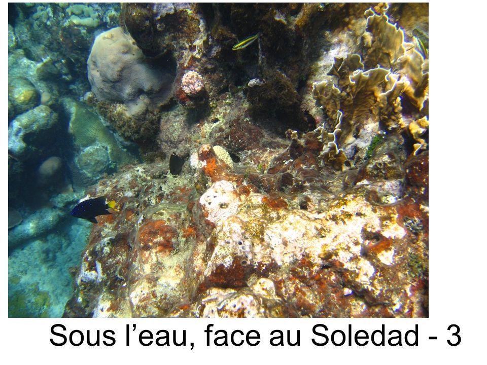 Sous leau, face au Soledad - 3