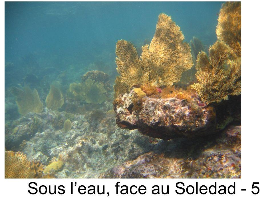 Sous leau, face au Soledad - 5
