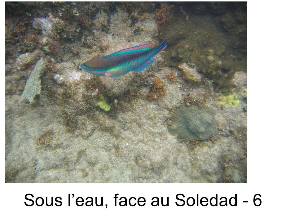 Sous leau, face au Soledad - 6