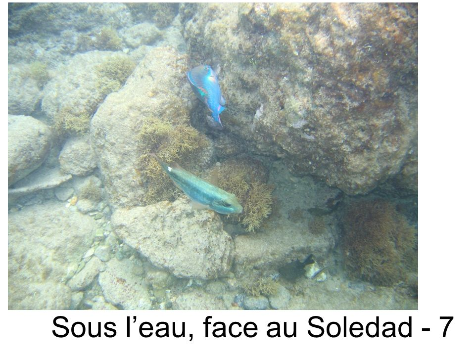 Sous leau, face au Soledad - 7