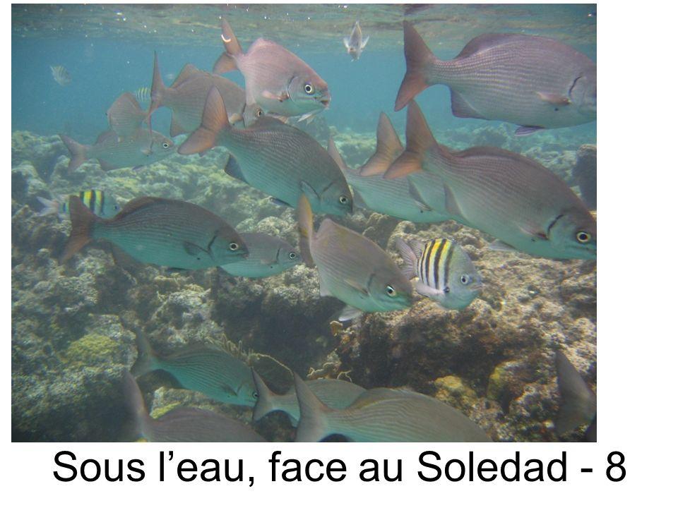 Sous leau, face au Soledad - 8