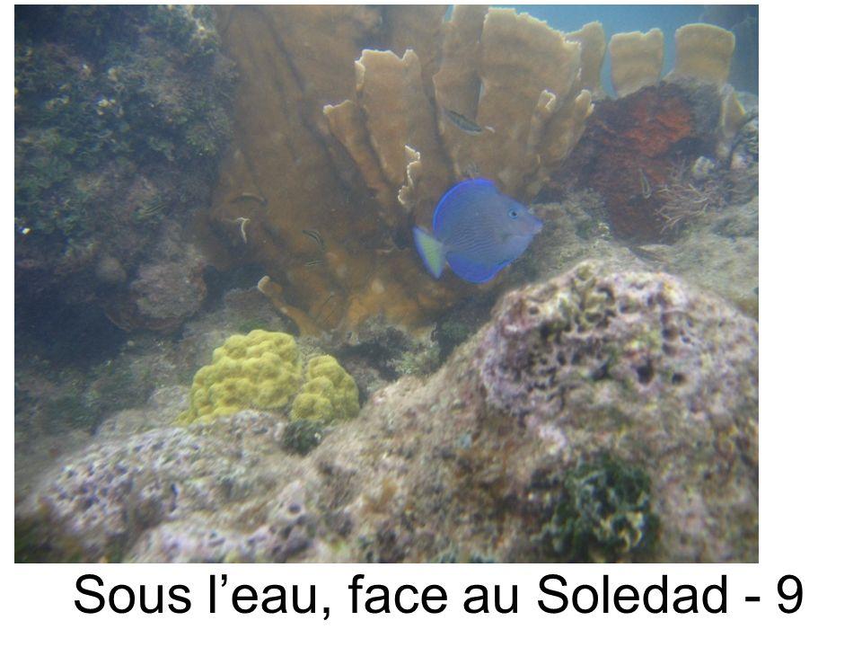 Sous leau, face au Soledad - 9