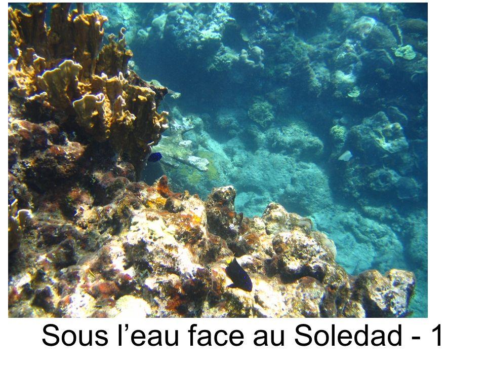 Sous leau face au Soledad - 1