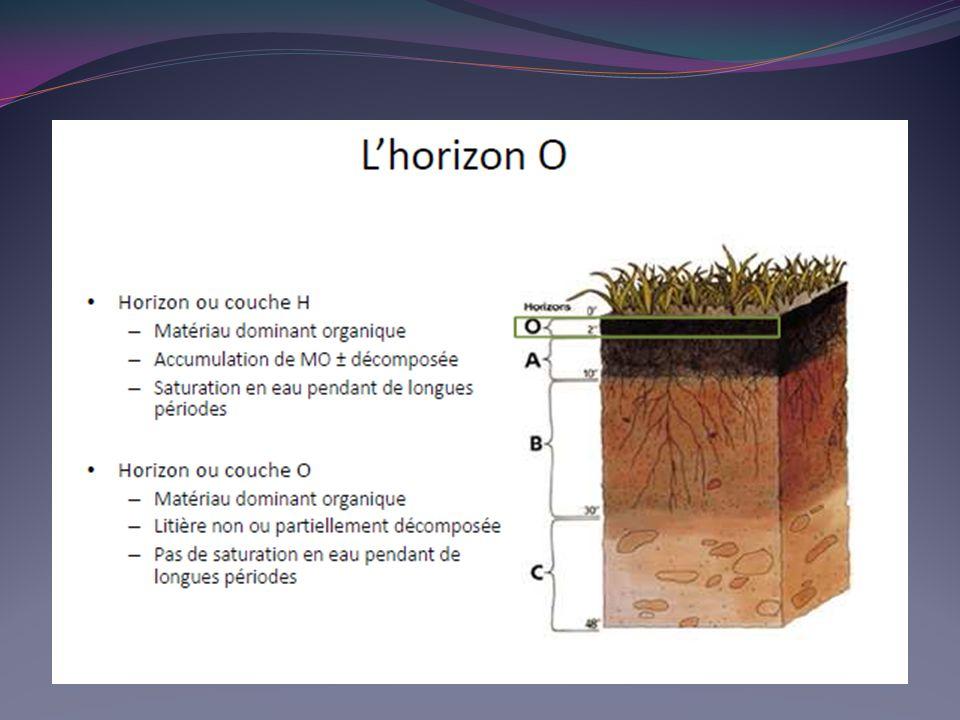 C est l humus qui représente la matière organique la plus importante dans le sol car : il est stable: sa minéralisation est de l ordre de 1 à 2 % par an sous climat tempéré ; 3 à 5 % sous climat tropical c est un colloïde électronégatif comme l argile.