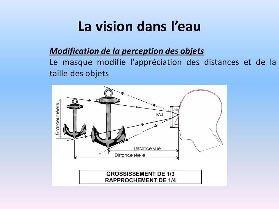 La vision dans leau Modification de la perception des objets Le masque modifie l appréciation des distances et de la taille des objets