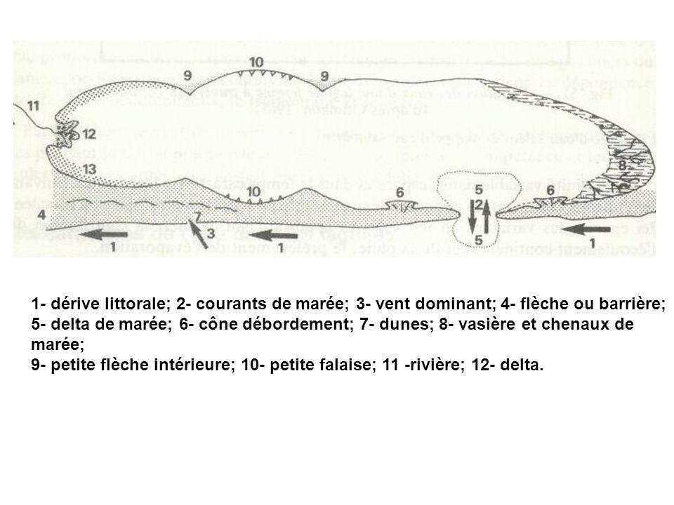 1- dérive littorale; 2- courants de marée; 3- vent dominant; 4- flèche ou barrière; 5- delta de marée; 6- cône débordement; 7- dunes; 8- vasière et ch