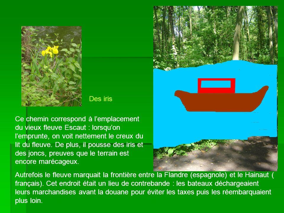 Ce chemin correspond à lemplacement du vieux fleuve Escaut : lorsquon lemprunte, on voit nettement le creux du lit du fleuve. De plus, il pousse des i