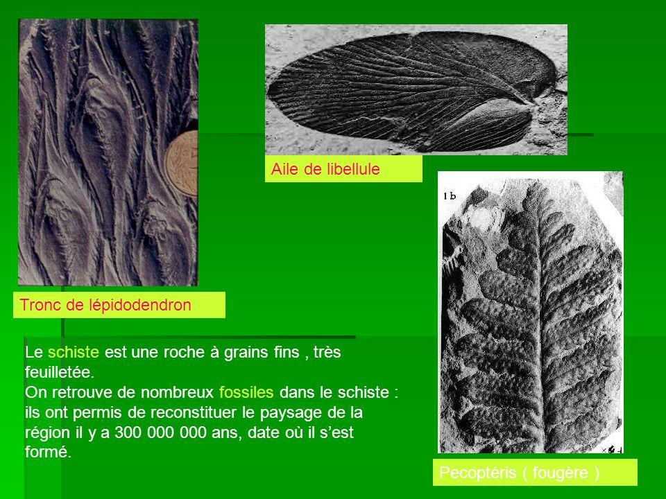 Le schiste est une roche à grains fins, très feuilletée. On retrouve de nombreux fossiles dans le schiste : ils ont permis de reconstituer le paysage
