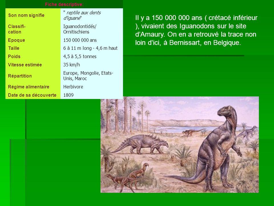 Il y a 150 000 000 ans ( crétacé inférieur ), vivaient des Iguanodons sur le site dAmaury. On en a retrouvé la trace non loin dici, à Bernissart, en B