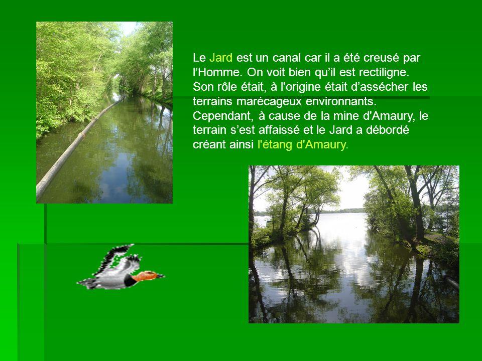 Le Jard est un canal car il a été creusé par lHomme. On voit bien quil est rectiligne. Son rôle était, à l'origine était dassécher les terrains maréca