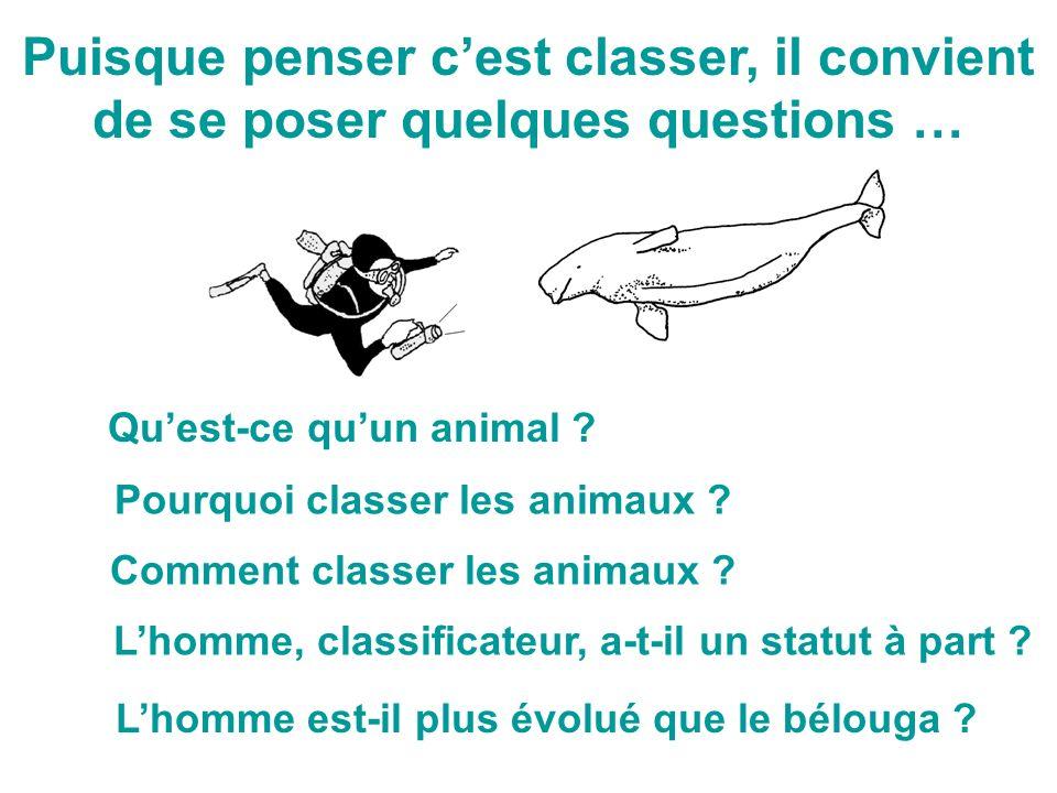 Puisque penser cest classer, il convient de se poser quelques questions … Lhomme est-il plus évolué que le bélouga ? Comment classer les animaux ? Lho