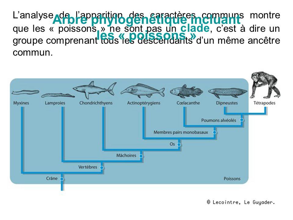 Lanalyse de lapparition des caractères communs montre que les « poissons » ne sont pas un clade, cest à dire un groupe comprenant tous les descendants