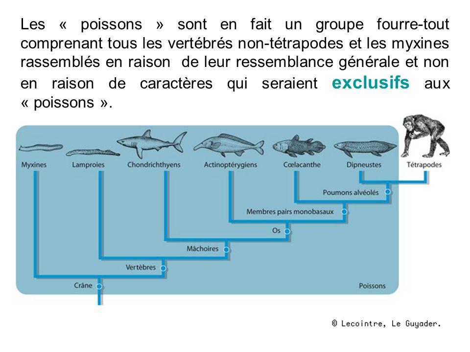 Les « poissons » sont en fait un groupe fourre-tout comprenant tous les vertébrés non-tétrapodes et les myxines rassemblés en raison de leur ressembla