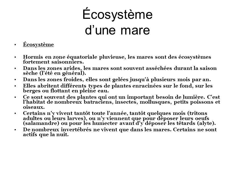 Écosystème dune mare Écosystème Hormis en zone équatoriale pluvieuse, les mares sont des écosystèmes fortement saisonniers. Dans les zones arides, les