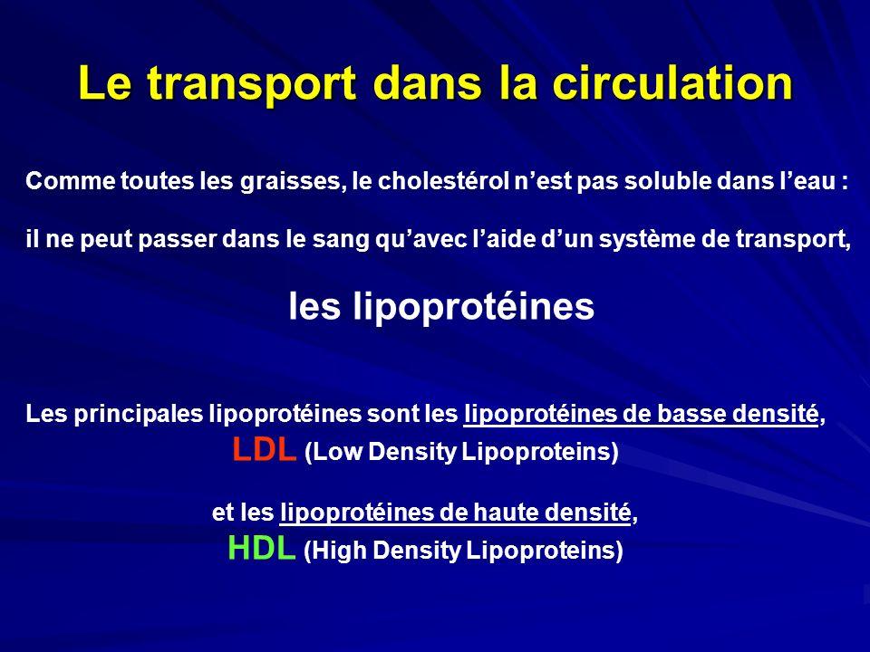 Le transport dans la circulation Comme toutes les graisses, le cholestérol nest pas soluble dans leau : il ne peut passer dans le sang quavec laide du