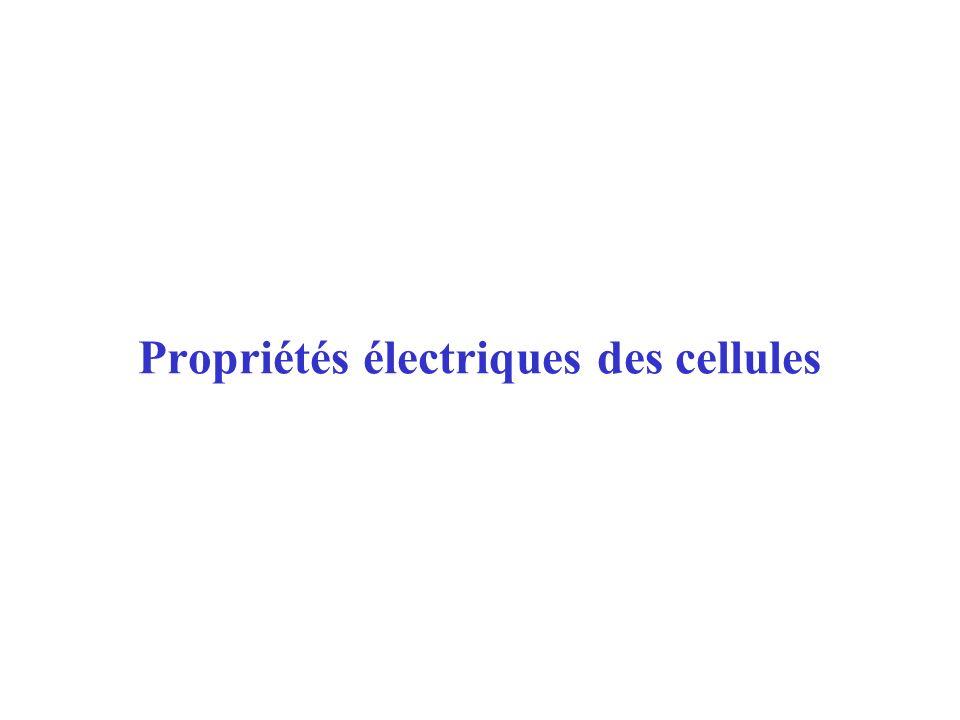 27/01/04Propriétés électriques des cellules12 La résistance transversale de la membrane est plus forte sous lanode (courant entrant hyperpolarisation) que sous la cathode (courant sortant dépolarisation).