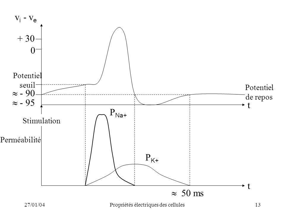 27/01/04Propriétés électriques des cellules13 v i - v e + 30 0 - 90 - 95 Potentiel seuil t t Potentiel de repos Stimulation Perméabilité 50 ms P Na+ P
