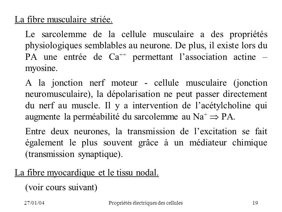 27/01/04Propriétés électriques des cellules19 La fibre musculaire striée. Le sarcolemme de la cellule musculaire a des propriétés physiologiques sembl