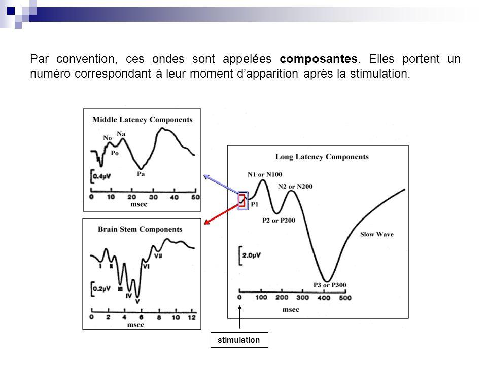 Par convention, ces ondes sont appelées composantes. Elles portent un numéro correspondant à leur moment dapparition après la stimulation. stimulation