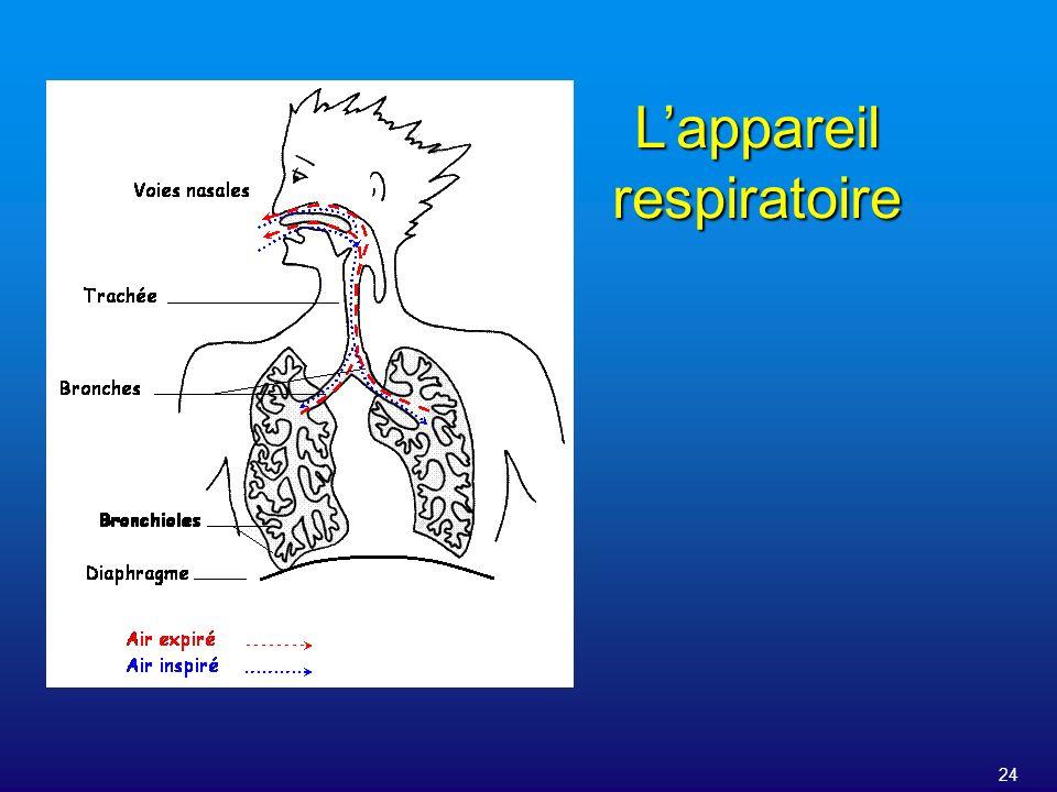 24 Lappareil respiratoire