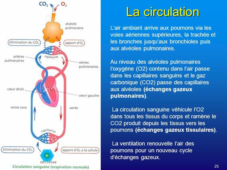 25 La circulation Lair ambiant arrive aux poumons via les voies aériennes supérieures, la trachée et les bronches jusquaux bronchioles puis aux alvéol