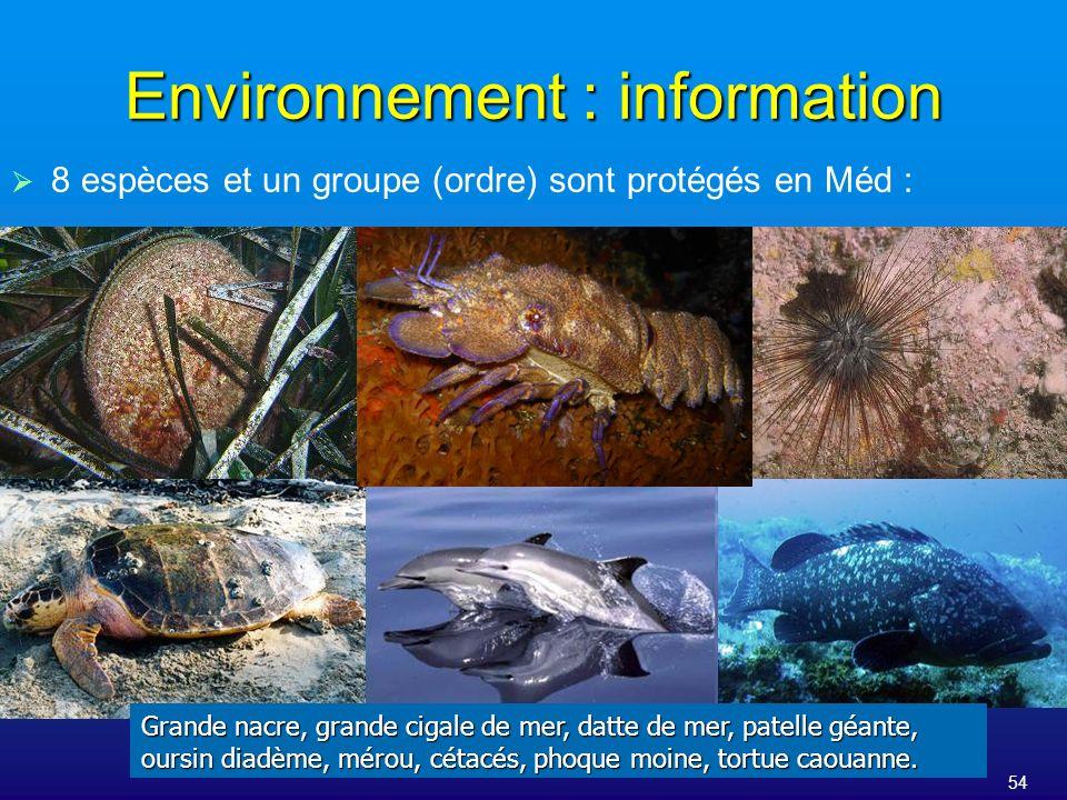 54 Environnement : information 8 espèces et un groupe (ordre) sont protégés en Méd : Grande nacre, grande cigale de mer, datte de mer, patelle géante,