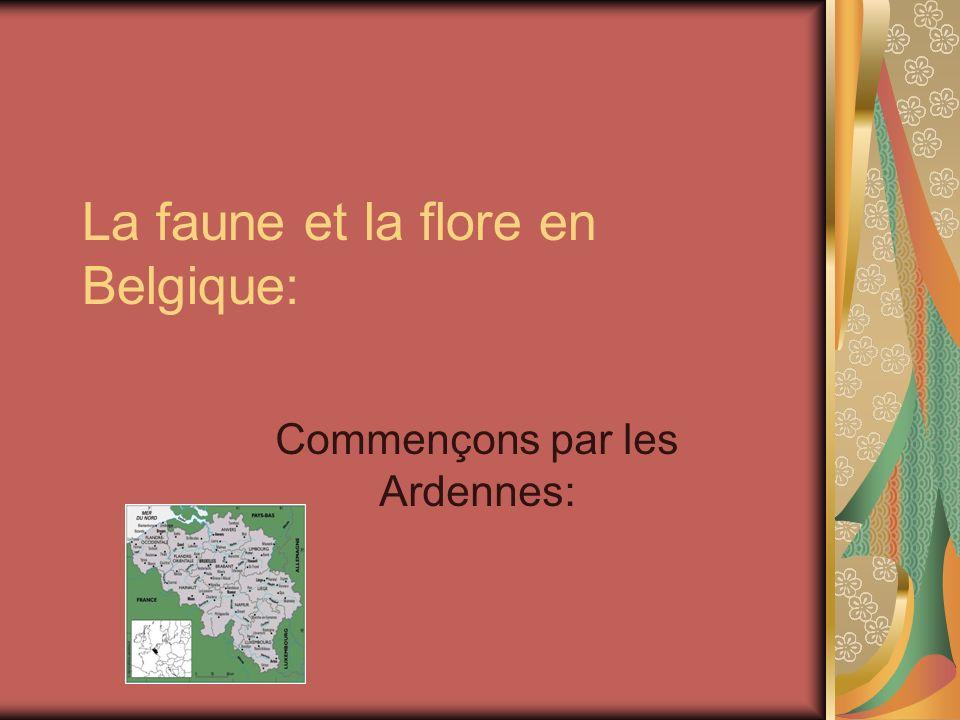 La faune et la flore en Belgique: Commençons par les Ardennes: