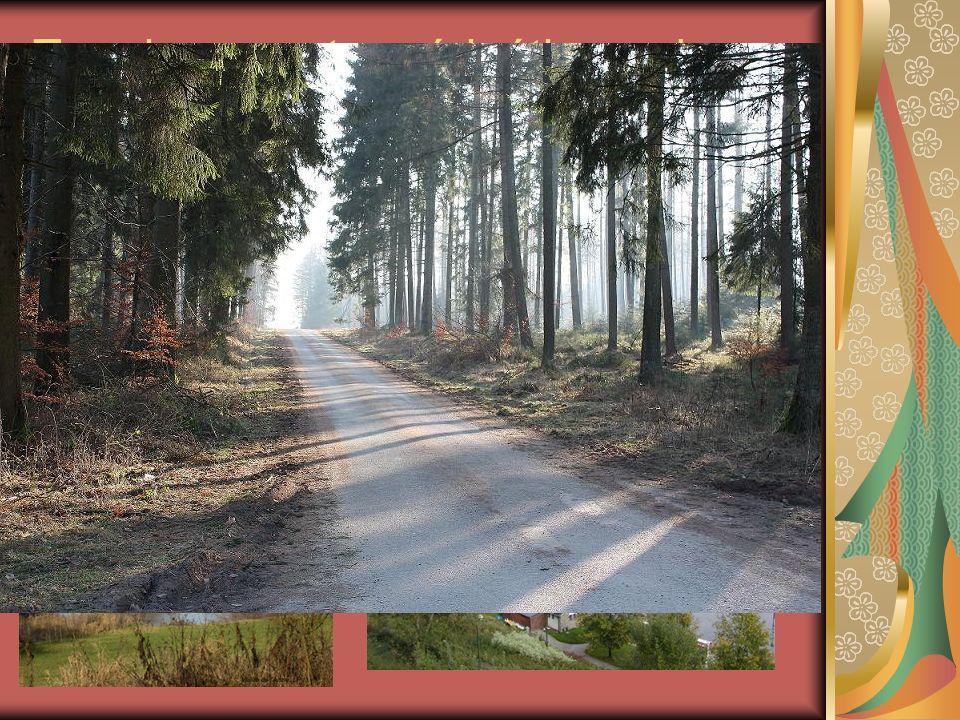 Terminons notre péripétie par la flore: De nombreux arbres, sapins envahissent les Ardennes.. La flore y est omniprésente!