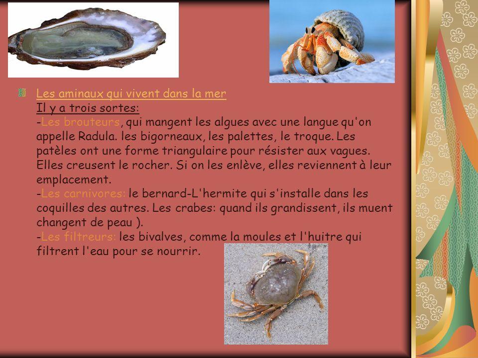 Les aminaux qui vivent dans la mer Les aminaux qui vivent dans la mer Il y a trois sortes: -Les brouteurs, qui mangent les algues avec une langue qu'o
