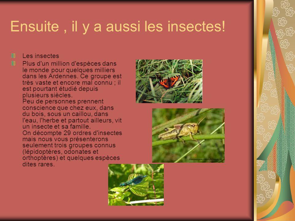 Ensuite, il y a aussi les insectes! Les insectes Plus d'un million d'espèces dans le monde pour quelques milliers dans les Ardennes. Ce groupe est trè
