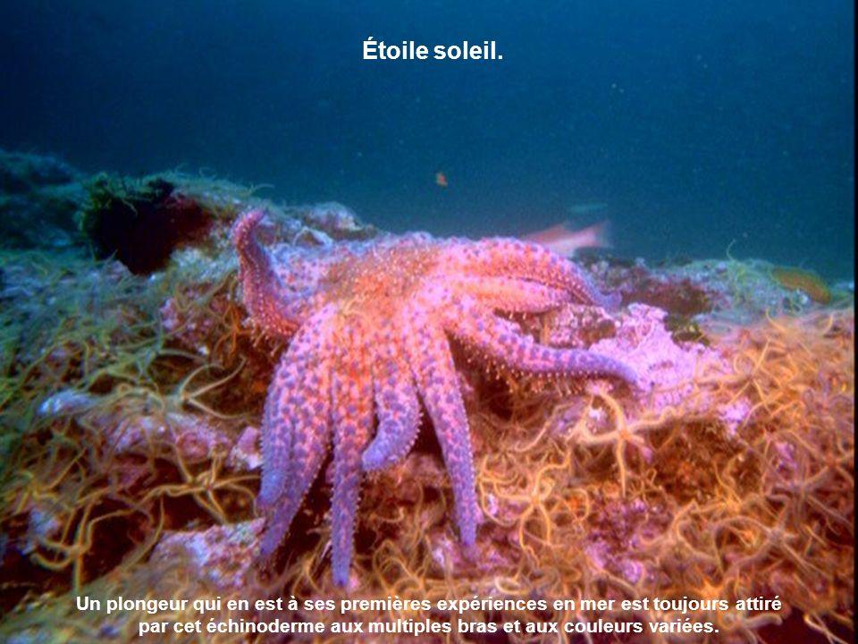 La méduse est un animal marin invertébré qui a la forme d une cloche ou d un parapluie.