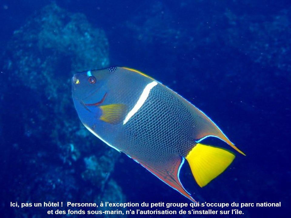La murène est un poisson qui peut devenir agressif si on le taquine trop.