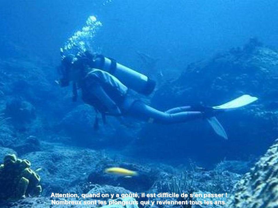 Cest vraiment un coin de paradis pour les plongeurs chaque jour un émerveillement.