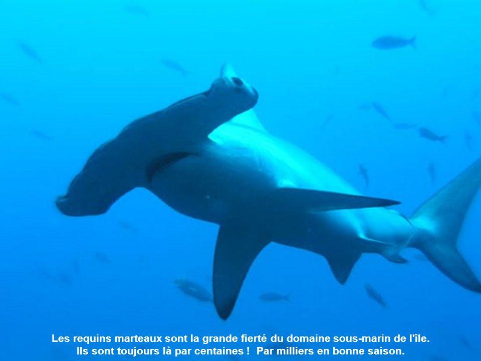 Ce parc naturel est protégé, sur terre, par 3 gardiens et, sous l eau, par des milliers de requins marteaux.