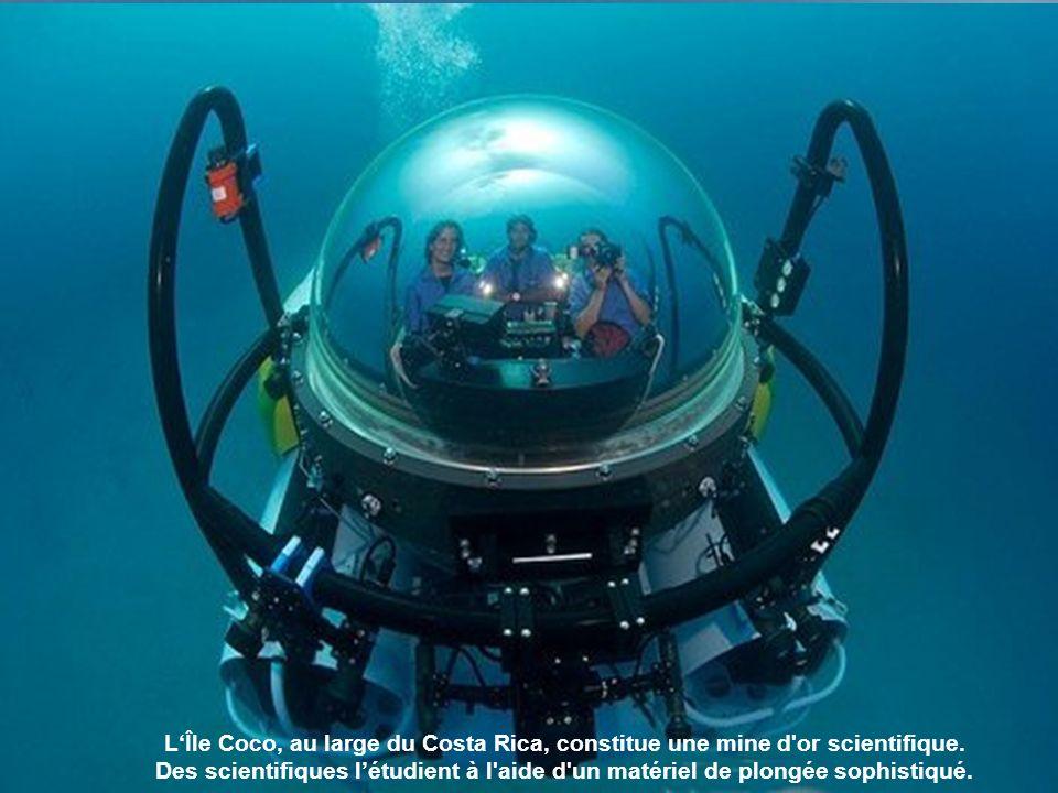 Les requins marteaux sont la grande fierté du domaine sous-marin de l île.